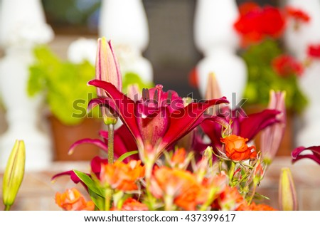 red lily in garden ,garden with flowers,spring flowers,green garden,colorful garden,flowers spring,red flowers,red petals,wonderful red flowers,long red petals,wonderful gardens,floral,lily gardens - stock photo