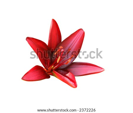 Red Lily (with clipping path) - stock photo