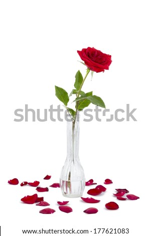 Red long stem rose in a vase surrounded by rose petals isolated on a white background - stock photo