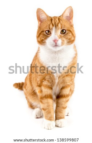 red male cat,sitting towards camera, isolated in white - stock photo