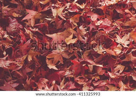 Red maple falling leaves on the earth background. Instagram effect. - stock photo