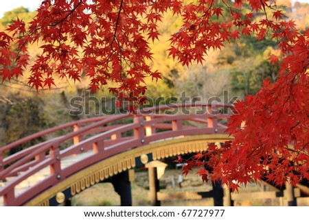 Red maple in Japan - stock photo