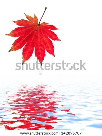 Red maple leaf and water drop. - stock photo