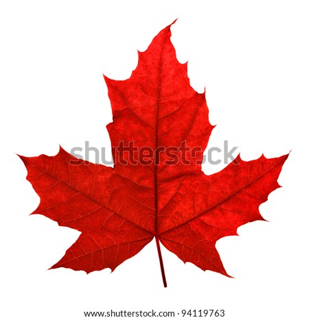 Red maple leaf, isolated on white - stock photo