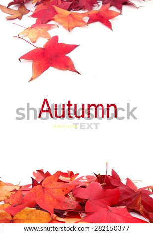 Red Maple leaf isolated on white background with copy space - stock photo