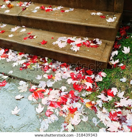 Red maple leaves on stone steps, on a rainy day. - stock photo