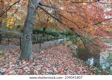Red maple tree in Central Park, New York City - stock photo