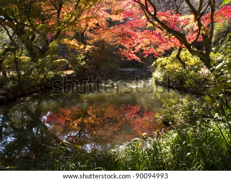 Red maple trees in Asia 7 - stock photo