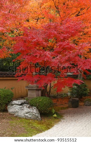 Red maple trees in Kyoto (Japan) - stock photo