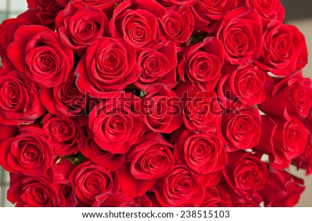 red natural roses for background - stock photo