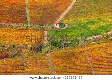Red, orange, yellow and green vineyards on the hills of Piedmont, Italy in autumn. - stock photo