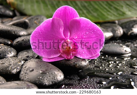 Red orchid and set of green leaf on wet pebbles - stock photo