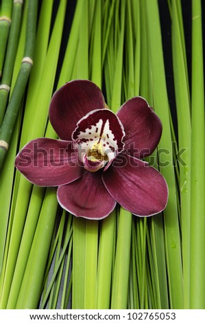 Red orchid and stones with green plant background - stock photo