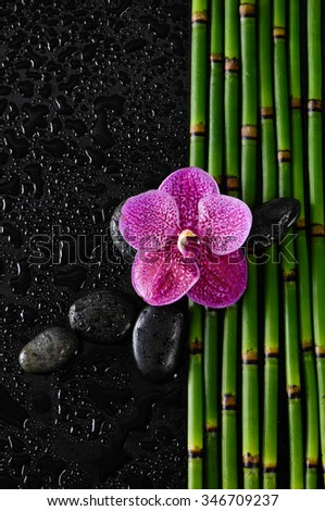 red orchid with black stones on bamboo grove â??wet background - stock photo
