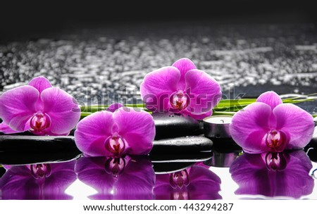 red orchid with pebbles and green leaf on wet background - stock photo