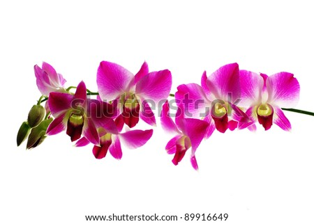 Red orchids isolated white  background - stock photo