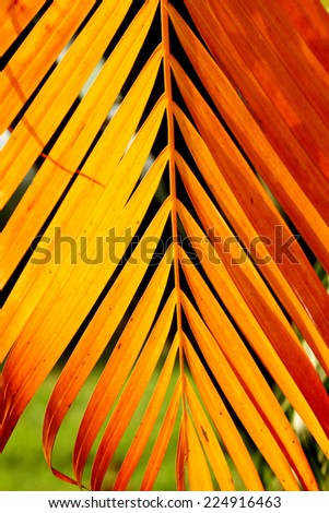 Red palm leaf texture - stock photo