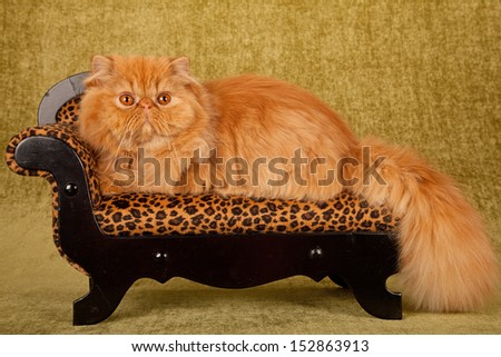 Red Persian cat on miniature leopard print chaise sofa couch on green background - stock photo