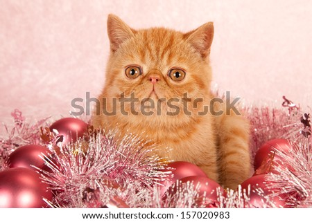 Red Persian cat with pink festive Christmas decorations on pink background - stock photo