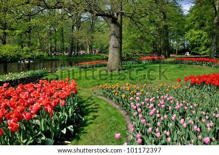 Red, pink, yellow tulips in Keukenhof park in Holland - stock photo