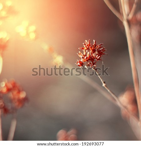 red plant on summer morning sunrise - stock photo