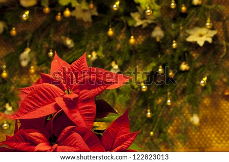 Red poinsettia flower against Christmas decoration selective focus - stock photo