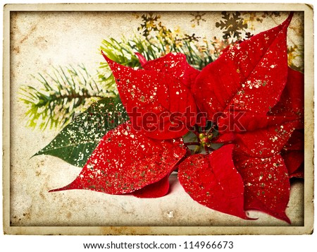 red poinsettia flower with christmas tree branch. vintage card concept - stock photo