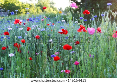 Red poppies and other wild flowers - stock photo