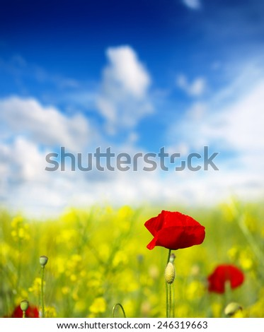 red poppy and wild flowers - stock photo