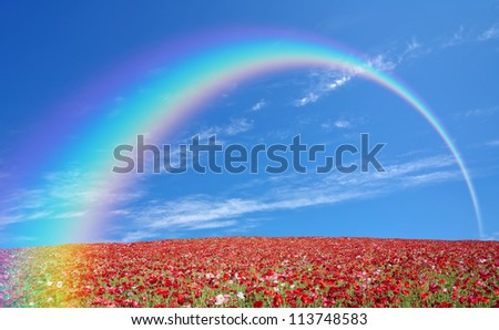 red poppy field and lone tree - stock photo