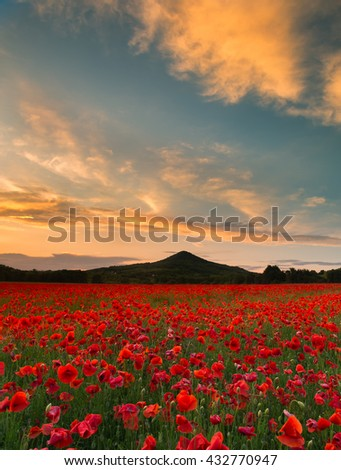 Red poppy field with clouds - stock photo