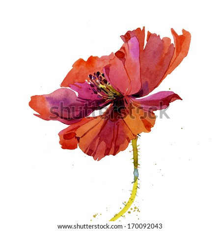 Red poppy flower greeting card design - stock photo