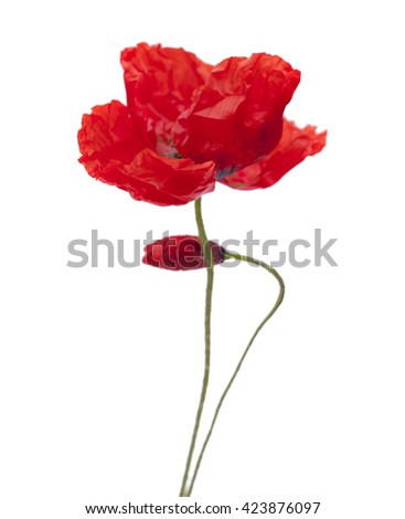 red poppy flowers isolated on white background - stock photo