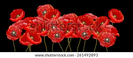 Red poppy illustration on black background - stock photo