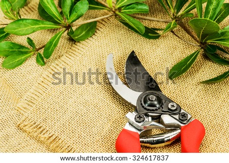 Red pruning shears with leaves - stock photo