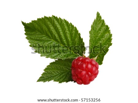 Red raspberry with green leaves - stock photo