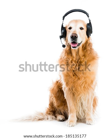 red retriever with headset isoleted on a white background - stock photo