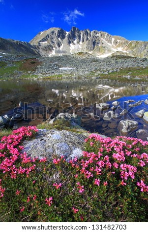 Red rhododendron flowers and glacier lake reflecting mountains, Retezat mountains, Romania - stock photo