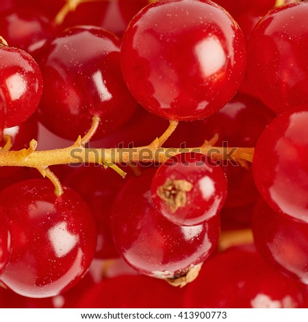 Red ripe Currant berries as texture background top view - stock photo