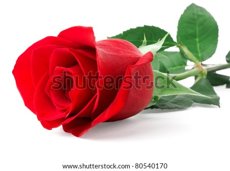 Red rose bud isolated on white background - stock photo