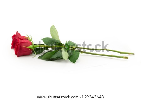 red rose bud, the petals of red roses - stock photo
