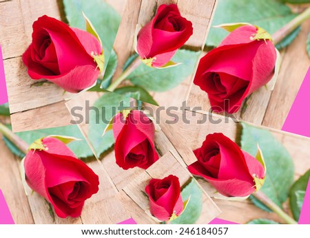 red rose collages on wood background - stock photo