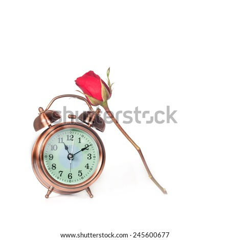 Red Rose Flower and alarm clock on isolate - stock photo
