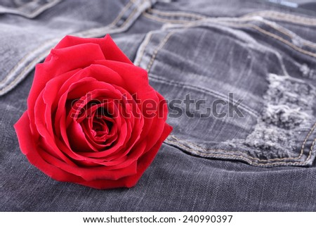 red rose flower on black jeans denim texture - stock photo