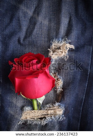 red rose flower on blue jeans denim texture - stock photo
