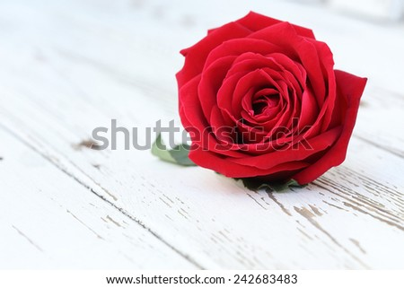 red rose flower on white wood background - stock photo