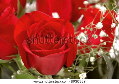 Red Rose in a bouquet of roses & baby's breath - stock photo