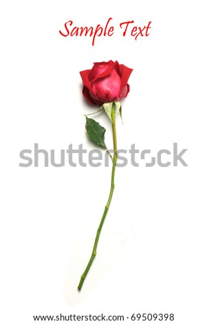 Red rose isolated on white background - stock photo