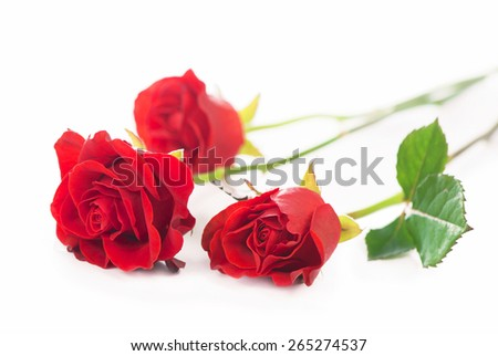 Red rose   isolated over the white background - stock photo