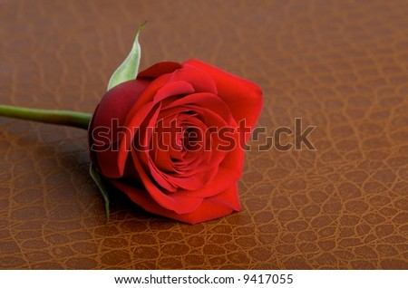Red rose on a textured brown leather background - stock photo